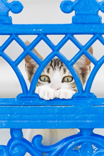 Kitten「Europe, Greece, Cyclades, Thira, Santorini, Oia, Kitten watching through fence」:スマホ壁紙(14)