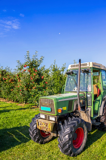 Thurgau「Switzerland, Thurgau, apple harvest」:スマホ壁紙(9)