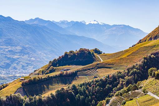 Valais Canton「Switzerland, Valais, Montagnon, vineyards」:スマホ壁紙(6)
