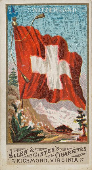 Edelweiss - Flower「Switzerland」:写真・画像(3)[壁紙.com]