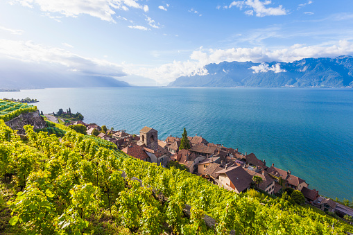 Vineyard「Switzerland, Lavaux, Lake Geneva, wine-growing area Saint-Saphorin」:スマホ壁紙(2)