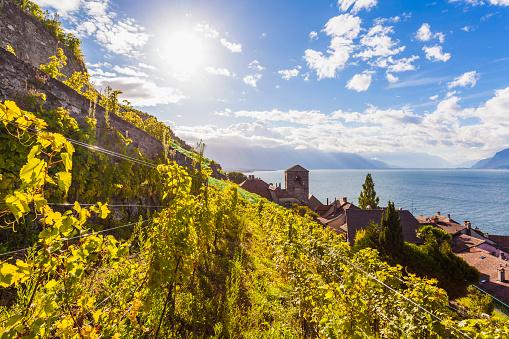 スイス「Switzerland, Lavaux, Lake Geneva, wine-growing area Saint-Saphorin」:スマホ壁紙(4)