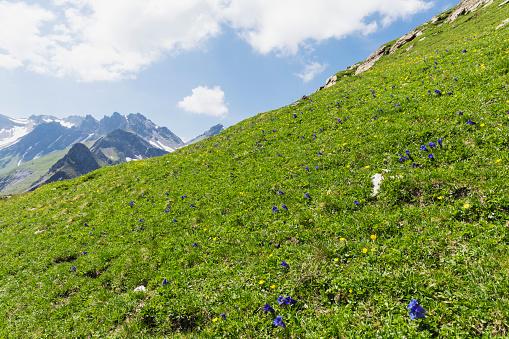 Gentian「Switzerland, St Gallen Canton, Gentian and buttercups on mountain meadow」:スマホ壁紙(18)