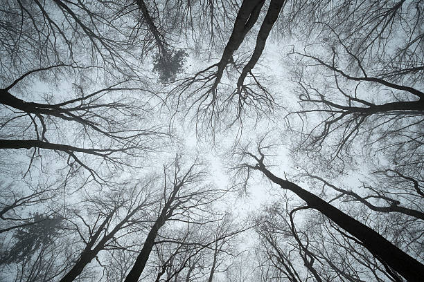 Switzerland, Thurgau, Beech forest in fog:スマホ壁紙(壁紙.com)