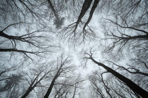 Branch - Plant Part「Switzerland, Thurgau, Beech forest in fog」:スマホ壁紙(9)