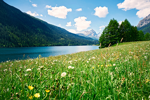 Graubunden Canton「Switzerland, Grisons, Sufers, Sufnersee and flower meadow」:スマホ壁紙(1)