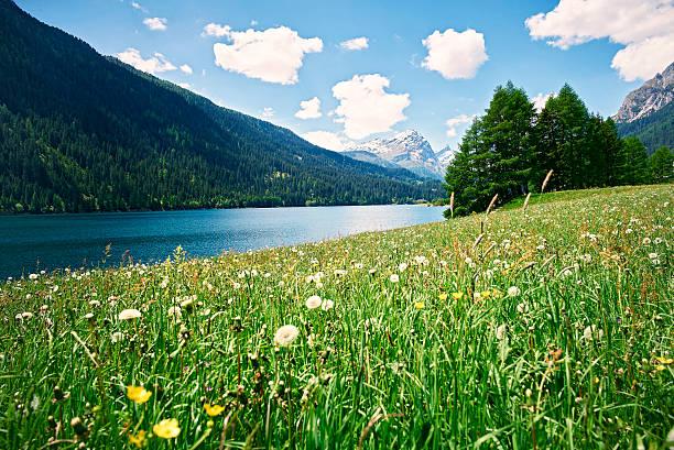 Switzerland, Grisons, Sufers, Sufnersee and flower meadow:スマホ壁紙(壁紙.com)