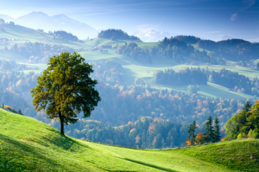 Rolling Landscape「Switzerland, Bernese Oberland, tree on hillside near Thun」:スマホ壁紙(6)