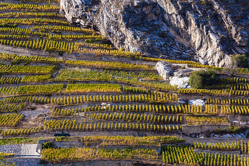 Steep「Switzerland, Valais, Ardon, vineyards at hillside」:スマホ壁紙(9)