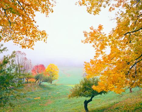 秋「Autumn 霧のバーモント(P )」:スマホ壁紙(0)