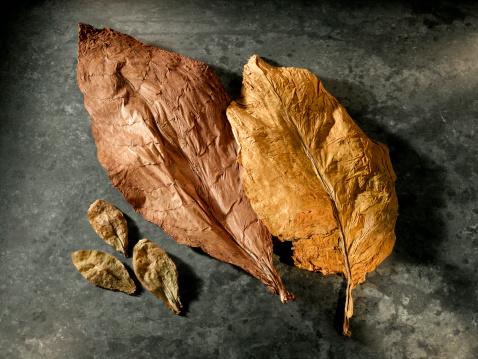 Crop - Plant「Tobacco Leaves」:スマホ壁紙(17)