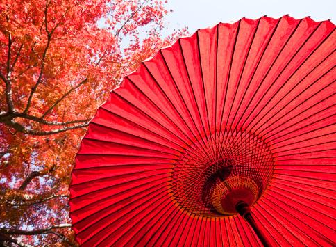 Japanese Maple「Autumn Japanese Umbrella」:スマホ壁紙(8)