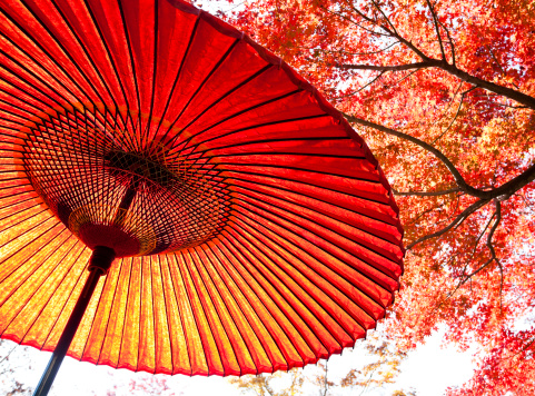Autumn Leaf Color「Autumn Japanese Umbrella」:スマホ壁紙(8)