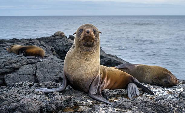 Sea lions:スマホ壁紙(壁紙.com)