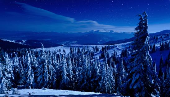 マツ科「冬の夜」:スマホ壁紙(11)
