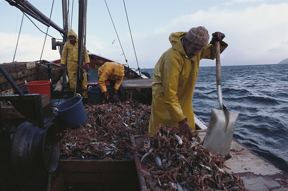 Crustacean「Tarbert Fishing」:写真・画像(12)[壁紙.com]