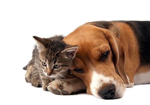 子猫「親しいご友人と」:スマホ壁紙(8)