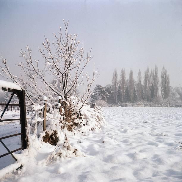 Snowy Scene:ニュース(壁紙.com)