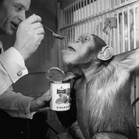 サーカス「Hungry Chimp」:写真・画像(12)[壁紙.com]