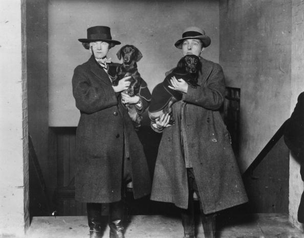 アーカイブ画像「Radclyffe's Daschunds」:写真・画像(12)[壁紙.com]