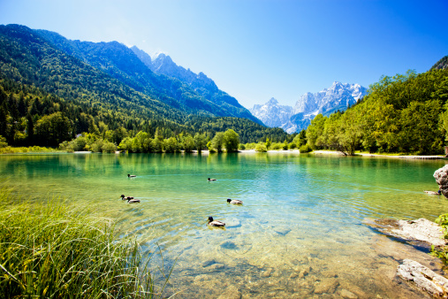 Julian Alps「Ducks swimming in mountain lake」:スマホ壁紙(9)