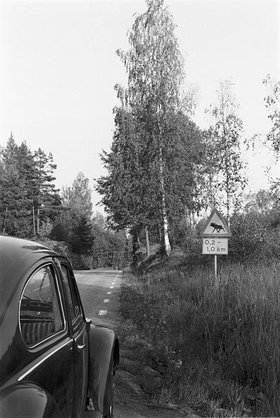 Red Deer - Animal「VW Beetle」:写真・画像(15)[壁紙.com]