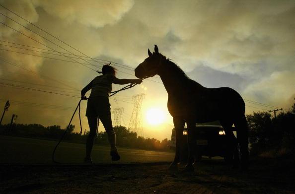Insurance「CA: Wildfires Return to Southern California」:写真・画像(8)[壁紙.com]