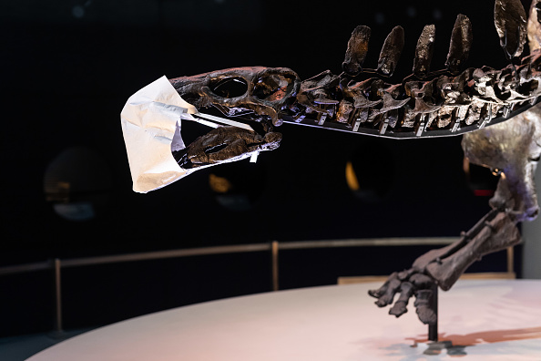 Natural History Museum - London「The Natural History Museum Reopening」:写真・画像(9)[壁紙.com]