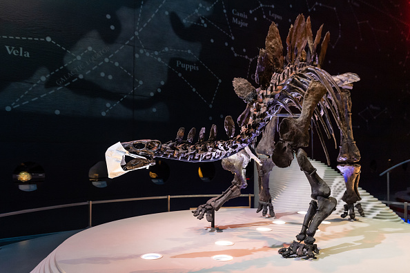 Natural History Museum - London「The Natural History Museum Reopening」:写真・画像(13)[壁紙.com]