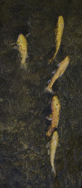 Carp「fish」:スマホ壁紙(0)