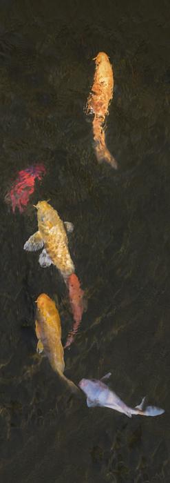 Carp「fish」:スマホ壁紙(1)