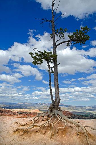 Vertical「Bryce Canyon National Park」:スマホ壁紙(9)