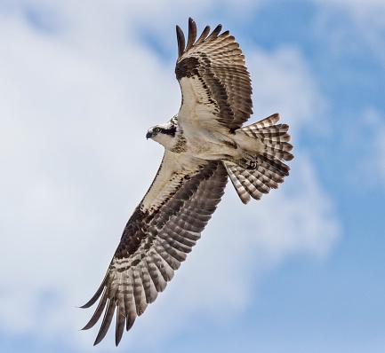 Bird of Prey「Flying High 8」:スマホ壁紙(1)