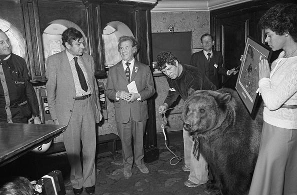 Brown Bear「Gold Joker For Bear」:写真・画像(18)[壁紙.com]