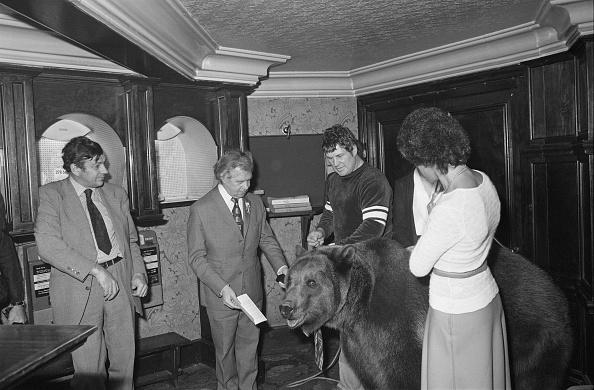 Brown Bear「Award For Hercules」:写真・画像(15)[壁紙.com]