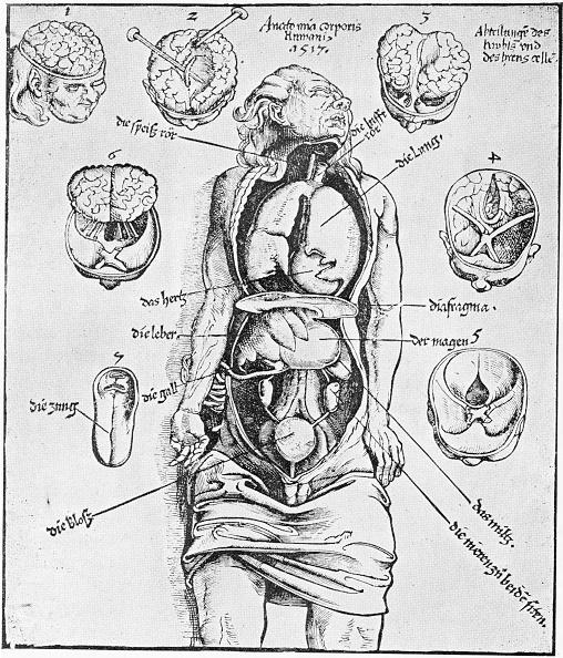 The Human Body「Anatomia Corporis Humani」:写真・画像(15)[壁紙.com]