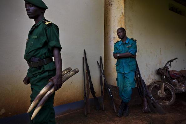 Poached Food「Cameroon Logging」:写真・画像(7)[壁紙.com]
