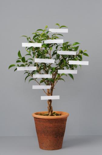 """Family Tree「Potted """"family-tree""""」:スマホ壁紙(4)"""