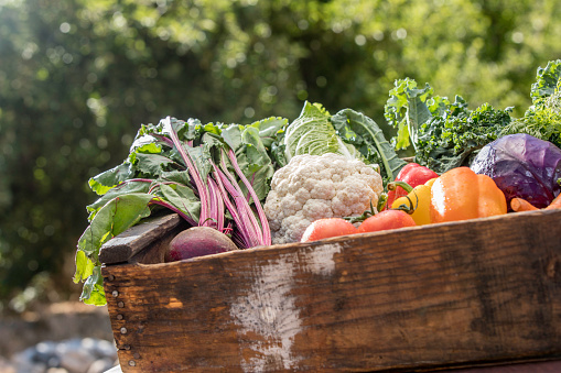 Cabbage Family「Fresh Organic Vegetables」:スマホ壁紙(15)