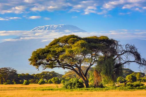 Volcano「Mount Kilimanjaro with Acacia」:スマホ壁紙(6)