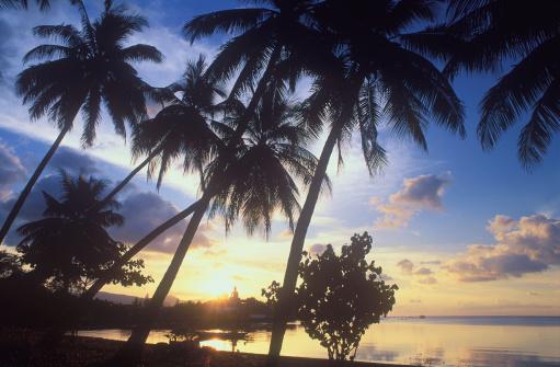 ビーチ「Sunset with palm trees at Big Buddha Beach」:スマホ壁紙(3)
