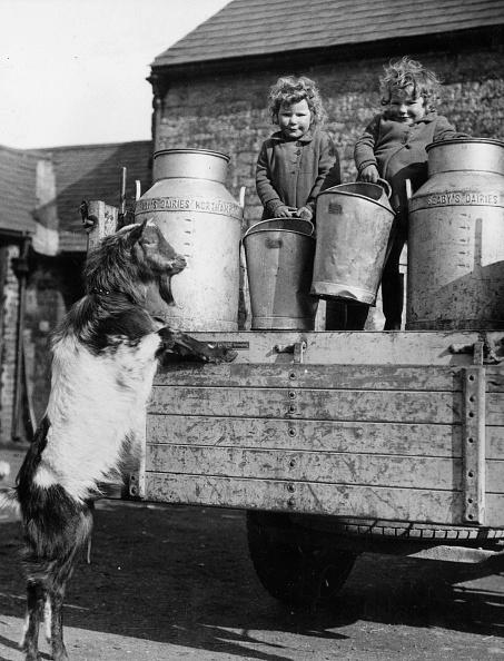 Bucket「Goat Help」:写真・画像(13)[壁紙.com]