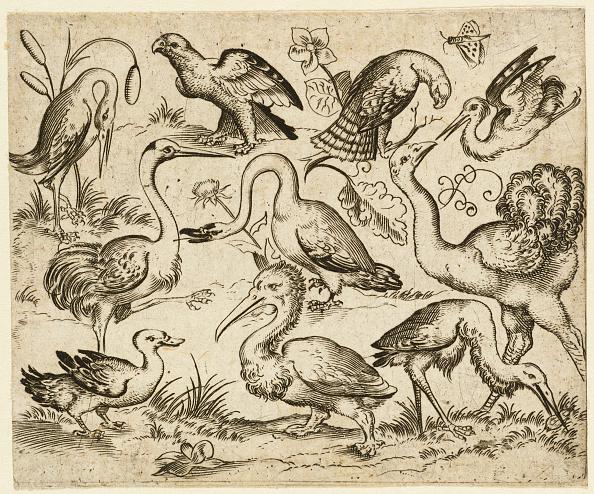 Simplicity「Ostrich On Left Side With Nine Other Birds」:写真・画像(8)[壁紙.com]