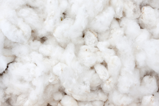 Harvesting「Raw Cotton Crops」:スマホ壁紙(4)