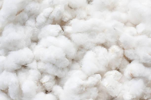Raw Cotton Crops:スマホ壁紙(壁紙.com)