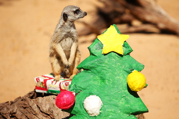 動物「Taronga's Animals Celebrate Christmas 2013」:写真・画像(7)[壁紙.com]
