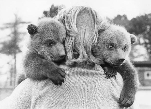 Animal Themes「Bear Cubs」:写真・画像(4)[壁紙.com]