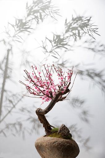 梅の花「Plum bonsai」:スマホ壁紙(7)