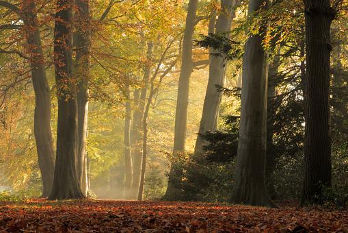 Woodland「Nature: Autumn Forest」:スマホ壁紙(13)