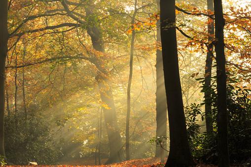 生い茂る「自然:秋の森」:スマホ壁紙(8)